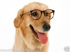 Imparare ad addestrare il tuo CUCCIOLO DOG TRAINING comportamento DVD VIDEO TUTORIAL GUIDA