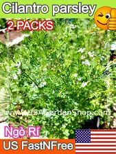 CORIANDER CILANTRO Coriander parsley HEIRLOOM 香菜 rau mui ngo ri 2x 1/4 tsp seeds