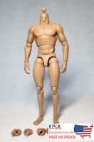 "ZC Toys 1/6 Scale Muscular Male Figure Body Model Fit 12"" Hot Toys Head Sculpt"