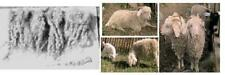 2oz RAW Angora Goat MOHAIR Fiber for Reborn DOLL, WIG CURLS, FELTING, SPINNING
