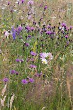 Flor Silvestre - Abejas y Mariposas flor Mix - 20g Semilla - No Hay Hierba