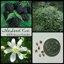 20+ ORGANIC BLACKBERRY SEEDS (Rubus ursinus) Sweet HEIRLOOM High Yeilding Berry