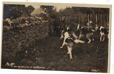 Somerset - Exmoor, hunting, pub Vowles, at bay on dry land at Bossington