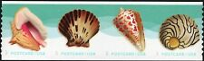 2017 34c Seashells Postcard, Pacific Calico, Strip of 4 Scott 5167-70 Mint VF NH