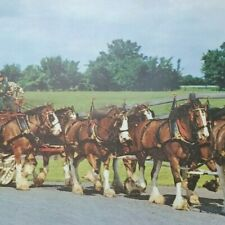 Budweiser Clydesdales Poster Sign Photo