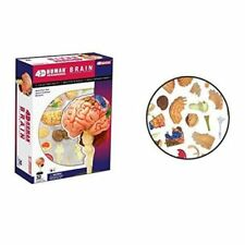 HUMAN BRAIN ANATOMY MODEL/PUZZLE,4D  Kit #26056 TEDCO SCIENCE TOYS