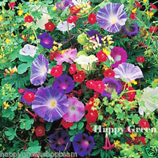 I fiori rampicanti mix - 3gr semi-MINA Sweet Pea Cobaea Bean MORNING Glory