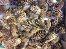 50 Pine Cones Spruce 5-10 cm  Crafts Make A Hedgehog Schools