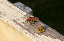 Trout Fish Metal & Enamel Lapel Pin Pinback