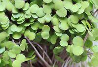 75,000+ Microgreens Seeds- Mega Assortment- Non-GMO- 7 Heirloom Varieties