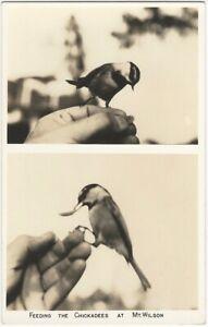 Feeding Chickadee at Mt. Wilson Vintage Real Photo Postcard Nature Bird