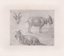 "Detailed 1800s Karl DUJARDIN Antique Print ""The Little Goat Study"" SIGNED COA"