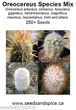 Espostoa Cactus Species Mix 250+ Seeds