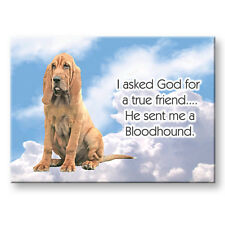 Bloodhound True Friend From God Fridge Magnet New Dog