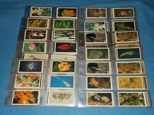 GRANDEE DONCELLA TOM THUMB CASTELLA ETC CIGARETTE CARD SETS  IN PLASTIC SLEEVES