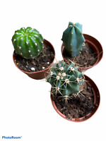 """2"""" Succulent & Cactus Variety Pack - 5 pack"""