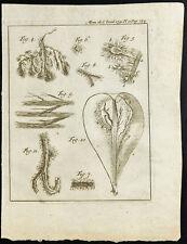 1777 - Incisione Anatomia D'Une Pera - Botanica - Accademia Reale Scienze
