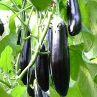 100 pcs seeds/pack purple eggplant seeds vegetable seeds FF