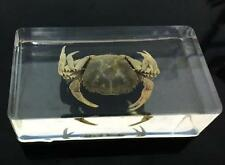 Yellow Crab Specimens In Lucite Paperweight/Collection