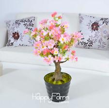 10 Pcs Seeds Bonsai Garden Plants Flores Japanese Cherry Tree Free Shipping 2019