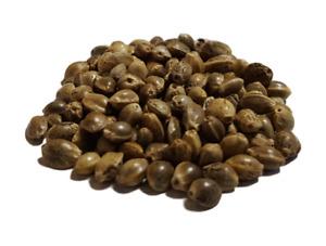 Graines de chanvre Bio 1kg TERRALBA à faire germer enzymes seed sprout