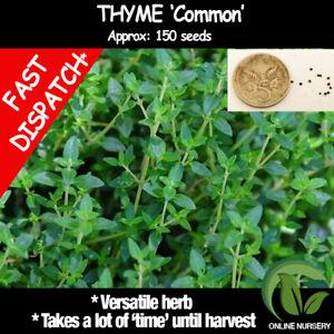 THYME 150 seeds | HERB | DROUGHT Tolerant | Garden, ORGANIC Herb Popular