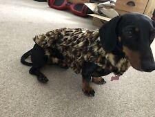 Furry Coat Dachshund