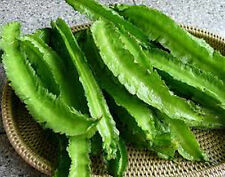 BEST 30 SEEDS GIANT WINGED BEAN GOA BEAN PRINCESS BEAN HEIRLOOM NEW ORIGINAL