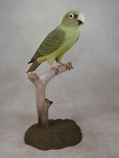 Jardine's Parrot Original Wood Carving