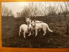 "POSTCARD...""THE THREE AMIGOS""..WHITE PUPPIES...DOGS..GERMAN SHEPHERD / ALSATIAN"