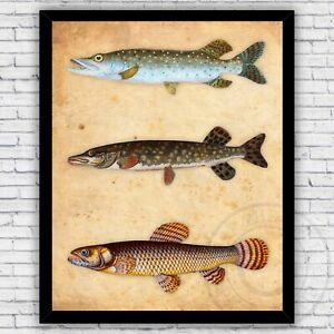 Pike Fish Species Northern and Malabar Illustration Print - Size & Frame Options