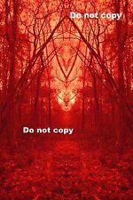 """Rare Photo Print """"Red Rorschach"""""""