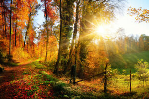Gorgeous landscape panorama in autumn Poster 18x12 inch