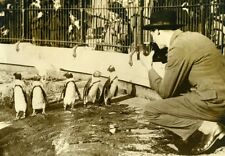 United Kingdom Photographer at London Zoo Penguins Old Photo 1920's