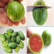 20 Rare Mini Watermelon Seeds Cucamelon Non Gmo Fruit Garden Vegetable Plant