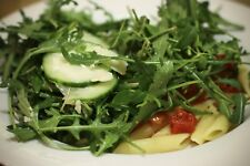 1,500+ Arugula- Wild Italian- Lettuce (Herb) Seeds- 2018 Seeds  $1.69 Max. Ship.
