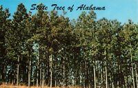 Postcard State Tree Alabama