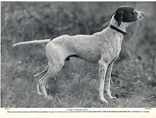 POINTER AMERICAN NAMED DOG WINNER OF DERBY STAKES N CAROLINA OLD 1934 DOG PRINT
