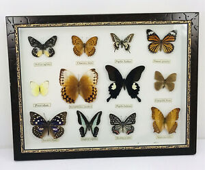 Vintage  REAL  MOUNTED Unique BUTTERFLIES  IN FRAME TAXIDERMY INSECTS