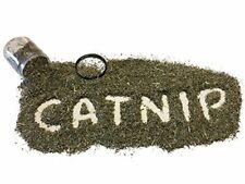 Catnip by Garry's Pets - Our Organic Maximum Potency Premium Blend Nip