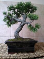 Lovely Quality  Artificial Potted BONSAI Tree in Heavy Ceramic Pot  ~ 26 CM High