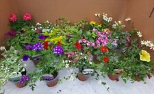 X18 Mixed Hanging Basket Bedding Plants 9cm Pots *NOT PLUGS* *MIX WILL VARY*
