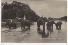 Tam Elephants Bathing Ceylon Vintage RPPC Postcard US050