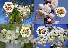 Liechtenstein 2017 Maxi Old Fruit Variétés Stone Fruits 8 V Set Cartes timbres