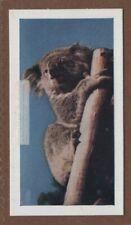 Australian Koala Bear Vintage Ad Trade Card