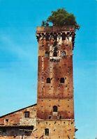 Cartolina Lucca Torre Guinigi