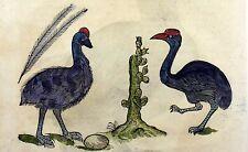 1637 Ulisse ALDROVANDI - EMU Grebe - LARGE FOLIO 2 Woodcuts