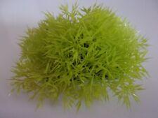 plante d'aquarium paillasson