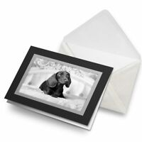 Greetings Card (Black) BW - Pampered Dachshund Puppy Dog  #42781