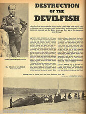Whaling History - The Destruction of the Devilfish